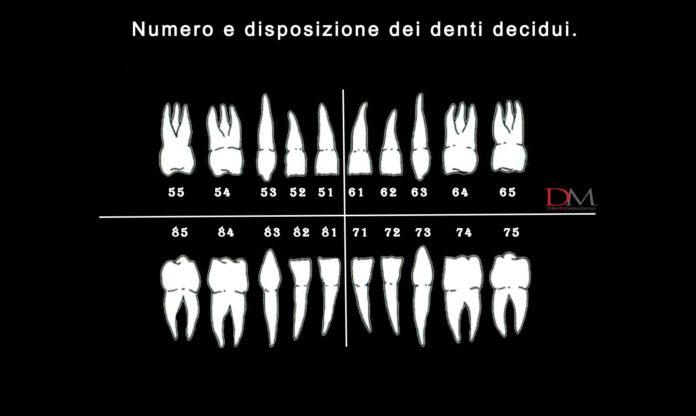 numerazione denti decidui dentizione permanente