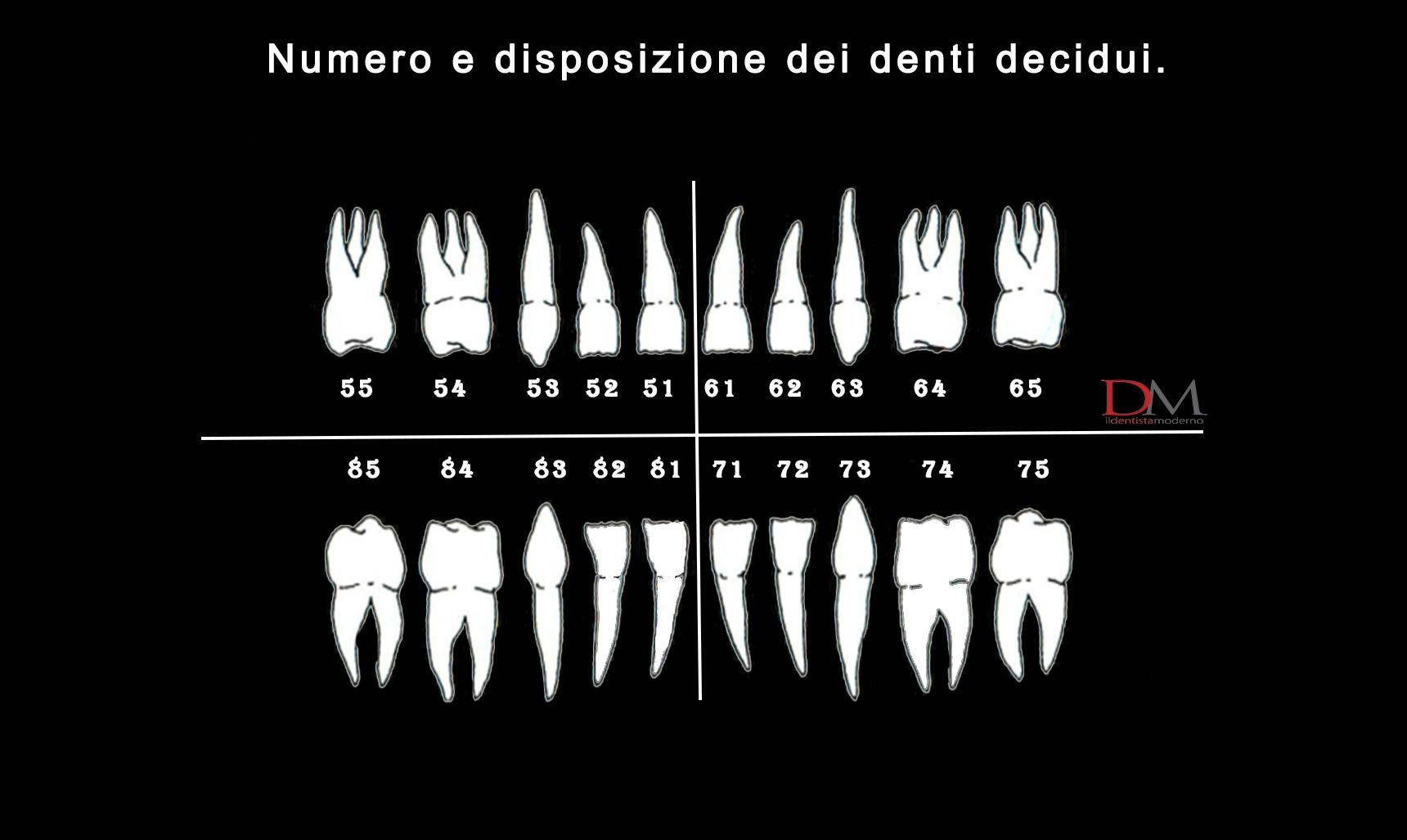 numerazione denti decidui