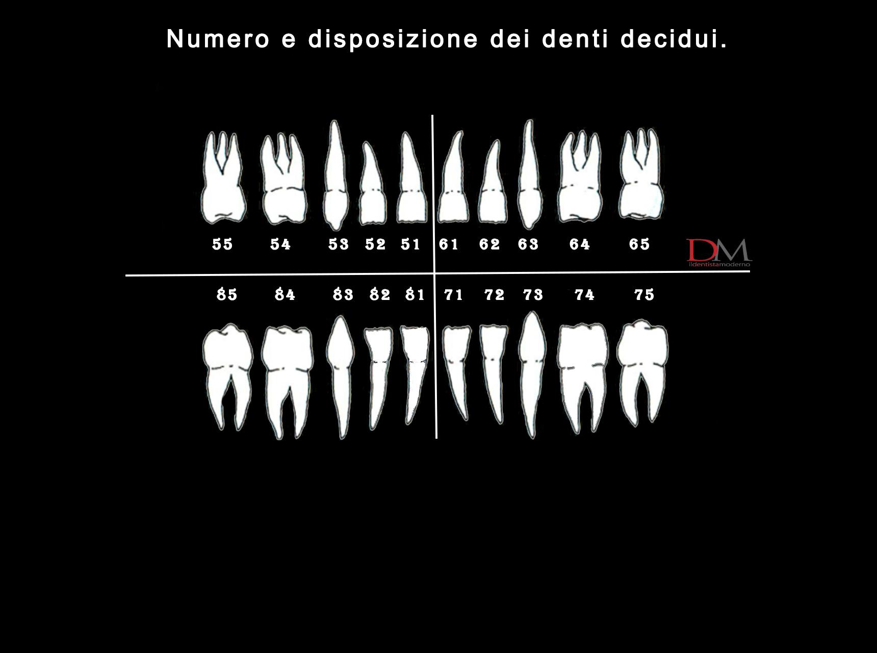 Numerazione denti i sistemi di classificazione pi utilizzati for Numero dei deputati e dei senatori