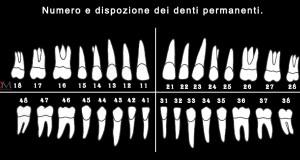 numerazione dentale numerazione denti permanenti