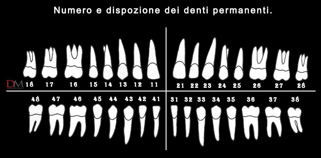 numerazione denti permanenti