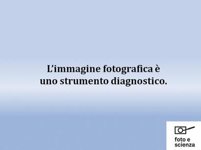 DM_2015_002_loiacono001