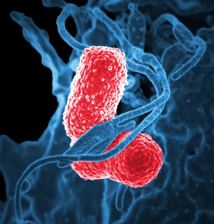 batteri del cavo orale clorexidina endodonzia
