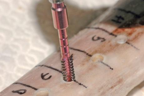 1. Studi su costoletta bovina: la misura della densità ossea con l'apposita sonda