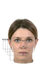 3. Lo schema del volto umano evidenza 5 rapporti aurei: M1/M2, M6/M5, M6/M1, M7/M3. - M1 distanza tra le pupille - M2 distanza linea degli occhi e mento - M3 distanza linea degli occhi e labbro inferiore - M4 distanza linea degli occhi e labbro superiore - M5 lunghezza del naso - M6 ampiezza del naso - M7 ampiezza della bocca