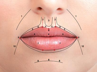 14. Anatomia macroscopica delle labbra: pieghe naso-labiali (1), colonne del filtro (2) e filtro labiale (3), arco di Cupido (4), lip white roll (5), vermiglio superiore con il tubercolo centrale (6), vermiglio inferiore (7), solco labio-mentale (8), commissure labiali (9), solchi melo-mentali (10)