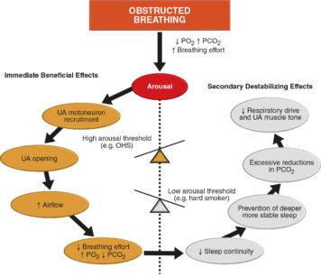 2. Tratto da Danny J. Eckert, Magdy K. Younes. Arousal from sleep: implications for obstructive sleep apnea pathogenesis and treatment J Appl Physiol (1985). 2014 Feb 1;116(3):302-13. Schematica esemplificazione di come la soglia di arousal (TA) sia uno snodo centrale nelle apnee del sonno. Un'alta soglia di arousal determina una pronta attivazione dei muscoli delle alte vie respiratorie (UA) che ne garantiscono la pervietà, ottenendo così minori desaturazioni ma un sonno estremamente frammentato. Questo quadro è caratteristico dei pazienti obesi e ipoventilati (OHS). Una bassa soglia di arousal, al contrario, determina invece un sonno più continuo ma con desaturazioni di ossigeno di grande entità, quadro invece più caratteristico dei forti fumatori
