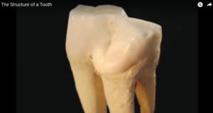 DM_il dentista moderno_invecchiamento dentale_smalto polpa dentina