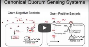 DM_il dentista moderno_Quorum quenching_quorum sensing