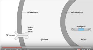 DM_il dentita moderno_ Utilizzo di fattori di crescita fibroblastici nella rigenerativa parodontale