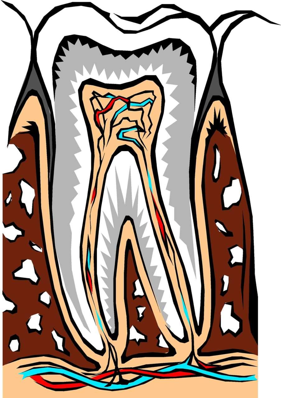 DM_il dentista moderno_Erosione smalto gli italiani ne ignorano le cause e pensano che si auto-rigeneri